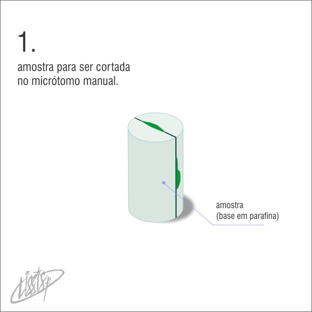 micrótomo manual 01