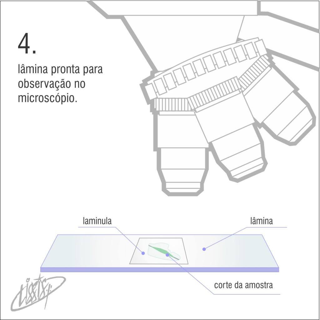 micrótomo manual 05