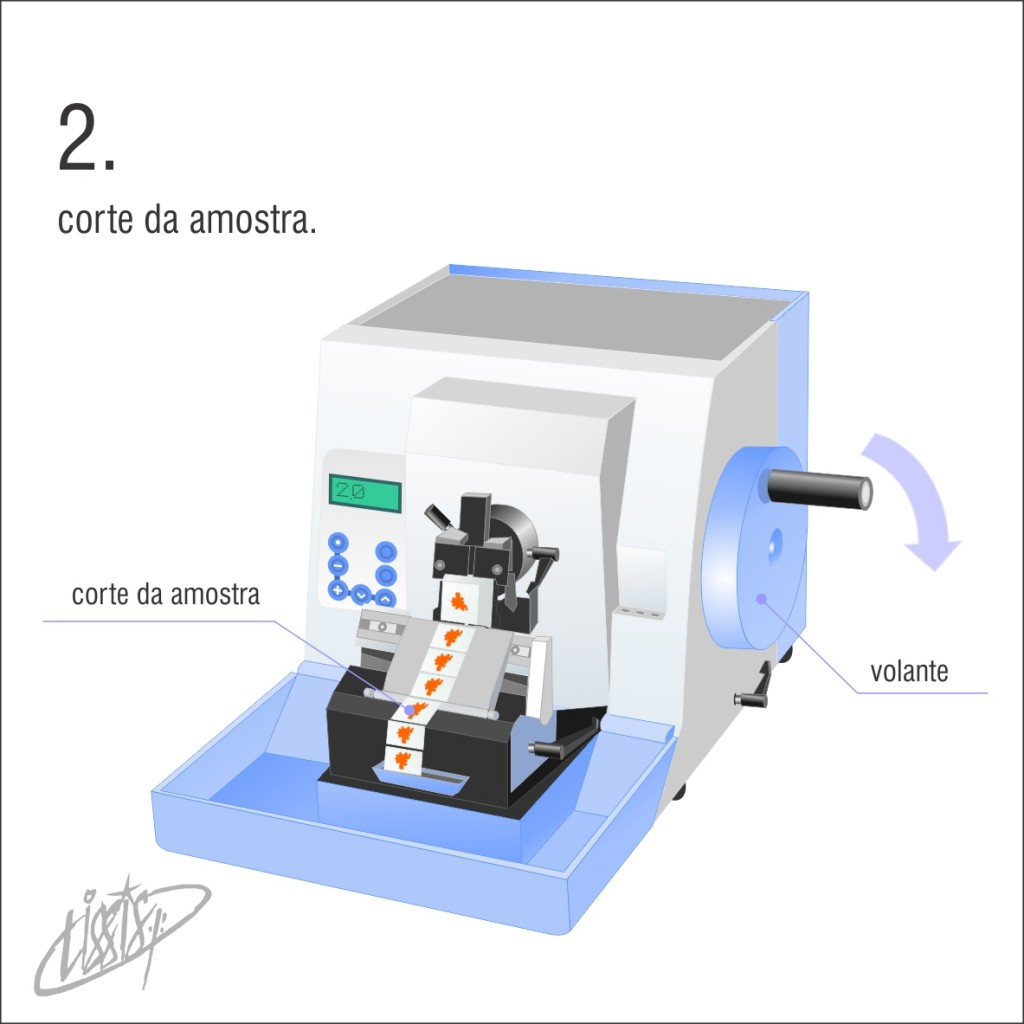 micrótomo manual rotativo 02