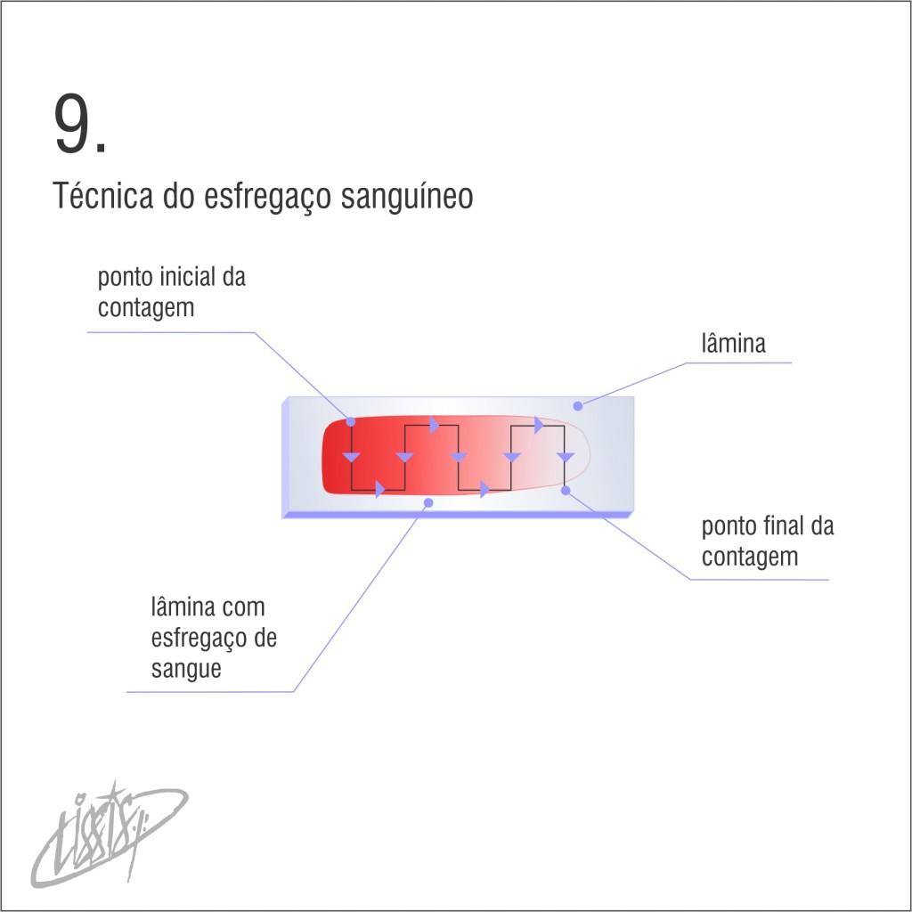 técnica de esfregaço 09