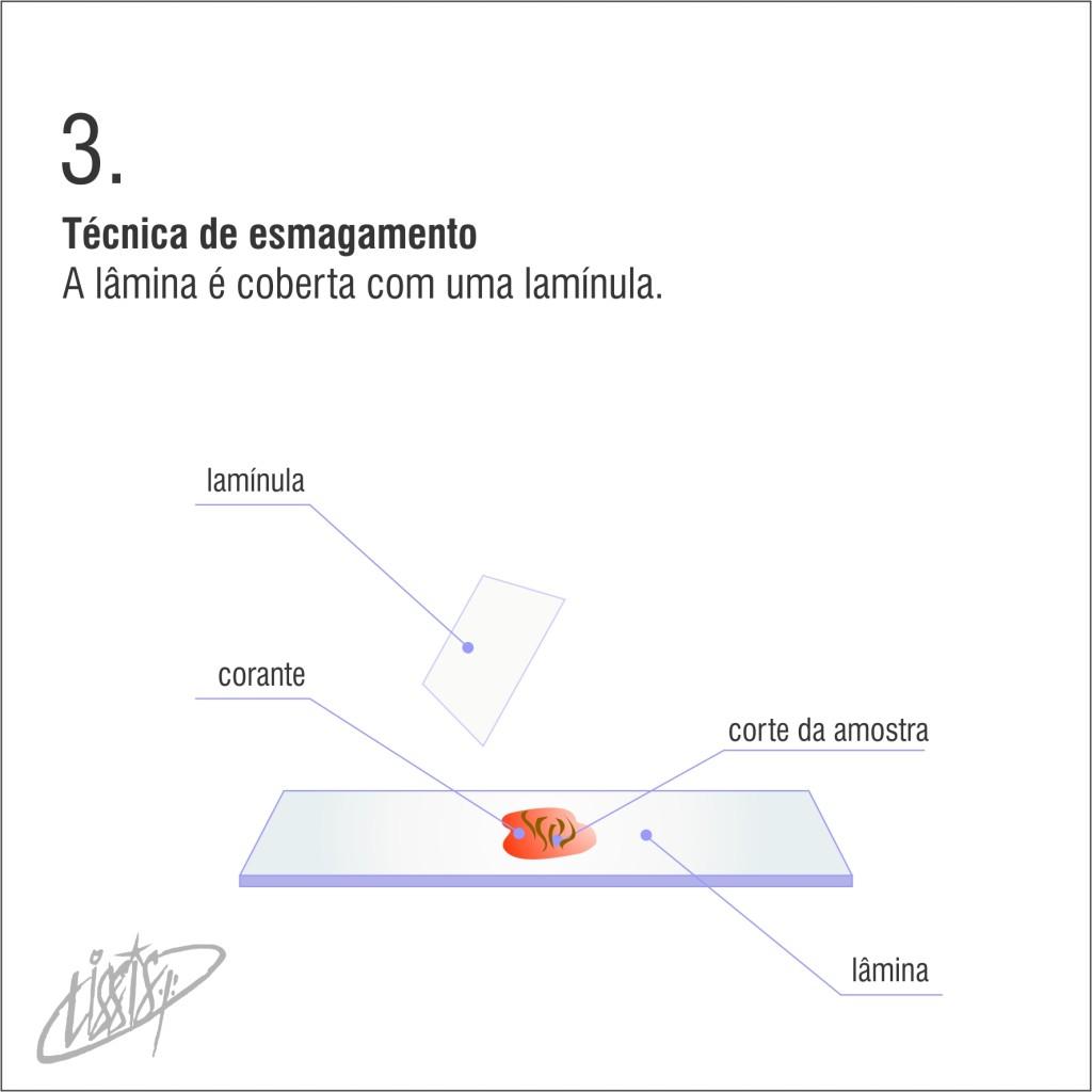 técnica de esmagamento 03