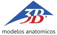 Modelos Anatomicos 3B